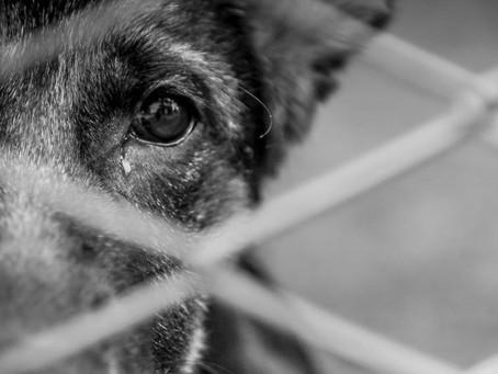 Como denunciar maus-tratos contra animais.