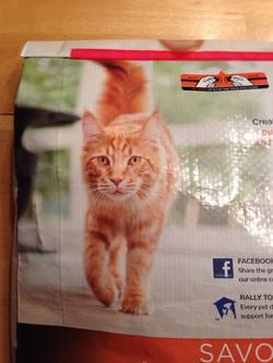 Kitten J on the Bag