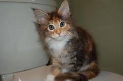 Liesl 8 weeks