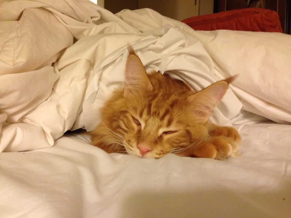 Kitten J