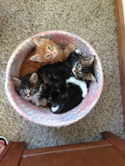 Basket o' Kittens