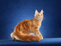 J as an International Kitten Winner