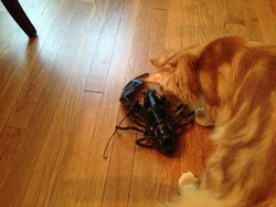 J & His Lobster