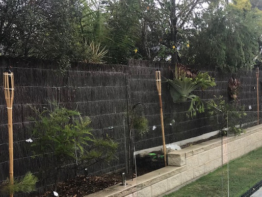 Glass Pool Fence Barely Visible