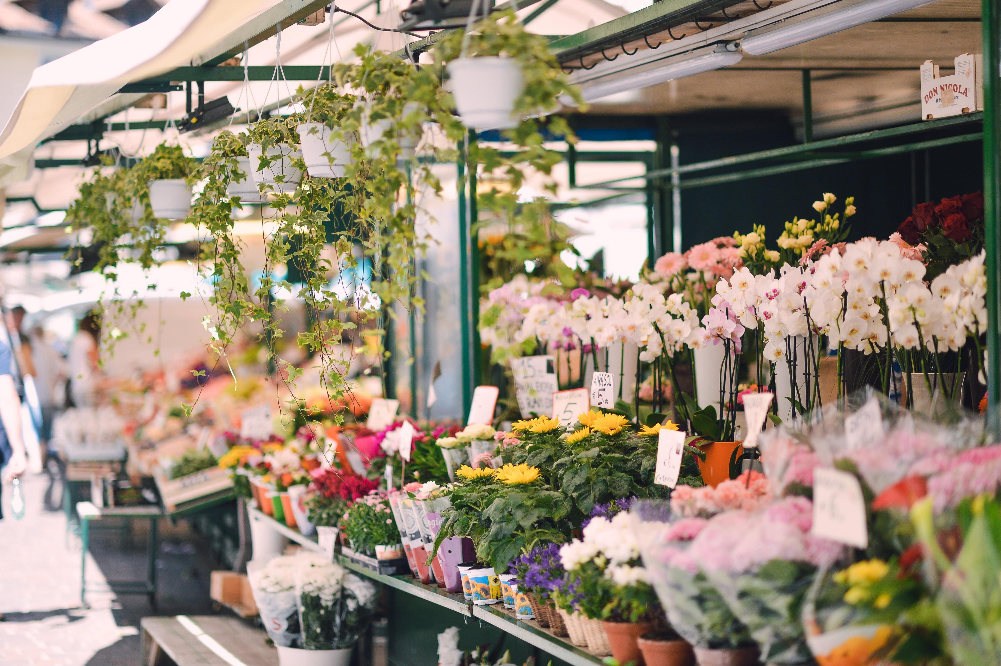 flowers_piazza erbe-