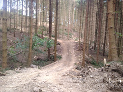 Home Forestry harvesting steep Valley in