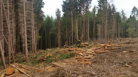 harvesting windblown timber at Burwarton estate Shropshire, timber harvesting contrator shropshire, timber harvesting, FSC timber harvesting