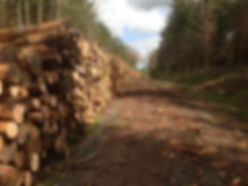 home forestry timber stack at cleeton shropshire, timber extration shropshire, forestry contracting shropshire, timber buyer