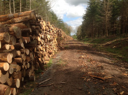 timber stack at cleeton 1080 m3