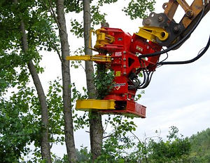 Rabaud Xylocut 400 tree shear for excavator, tree shear, timber harvesting, roadside clearence, tree removal