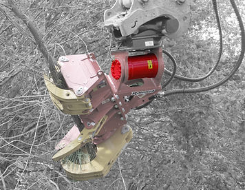 Rabaud xylocut tree shear inclination