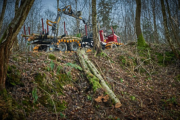 Alstor 821 mini forwarder, mini-forwarder, low ground pressure forwarder, low impact forestry, SSSI forestry machinery,
