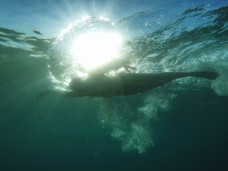 Triathlon wetsuit brands navigating choppy waters