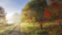 Autumn Walks East Sussex