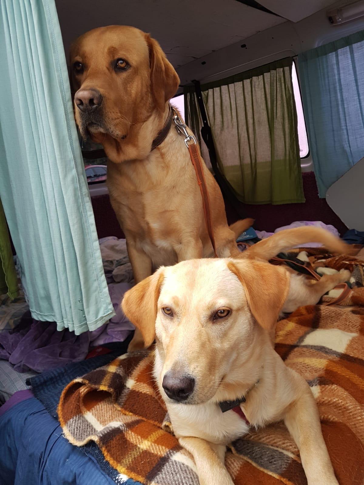 Murphy & Tiffy