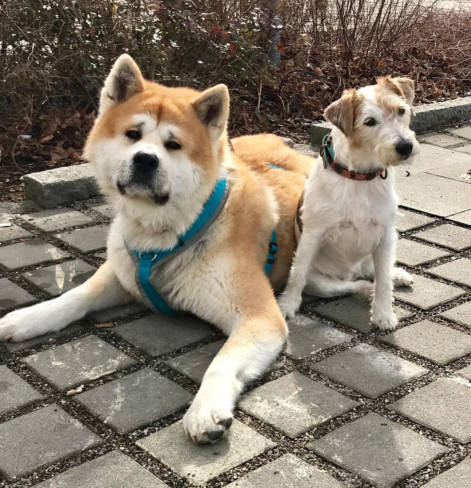 Akki & Bella