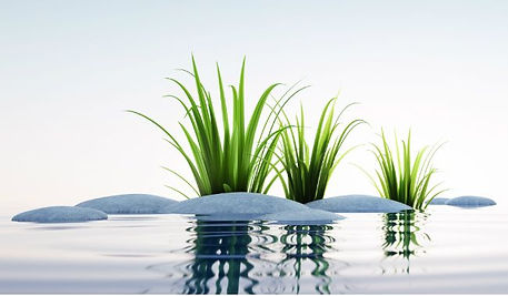 Parenting Coaching_Plants in Water_650x3
