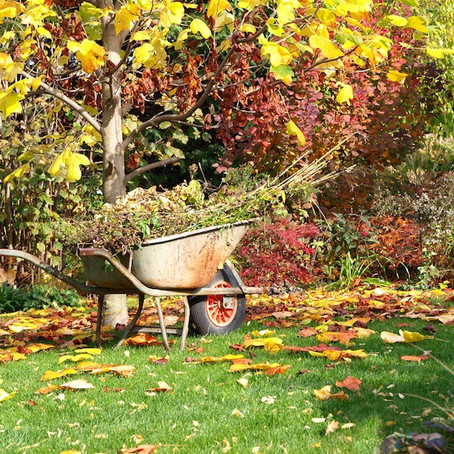 Are you a clean and tidy before winter or a messy until spring gardener?