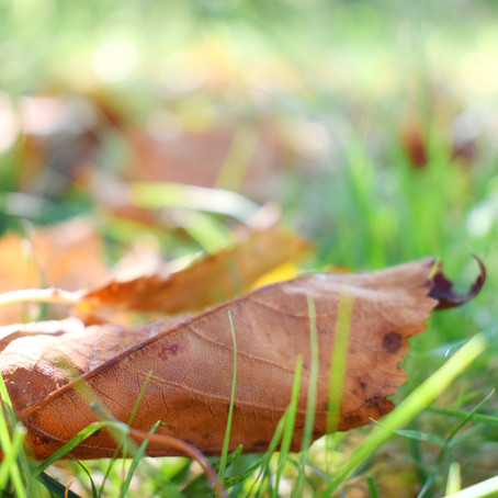 Take Steps This Fall For A Beautiful Lawn Next Spring