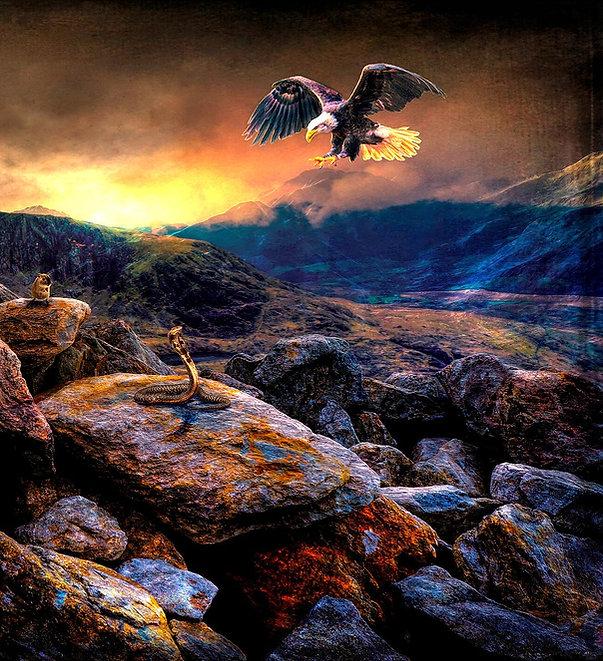 eagle-3494185_1920_edited.jpg