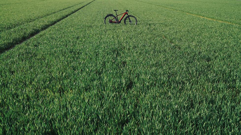 Wiesengrünes Feld mit Fahrrad