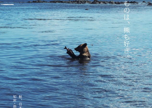 鮭はヒグマも大好物