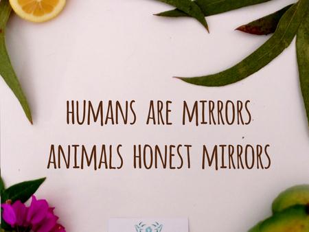 Humans are mirrors, animals honest mirrors.