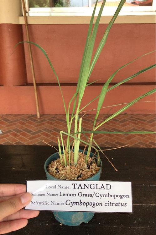 Tanglad