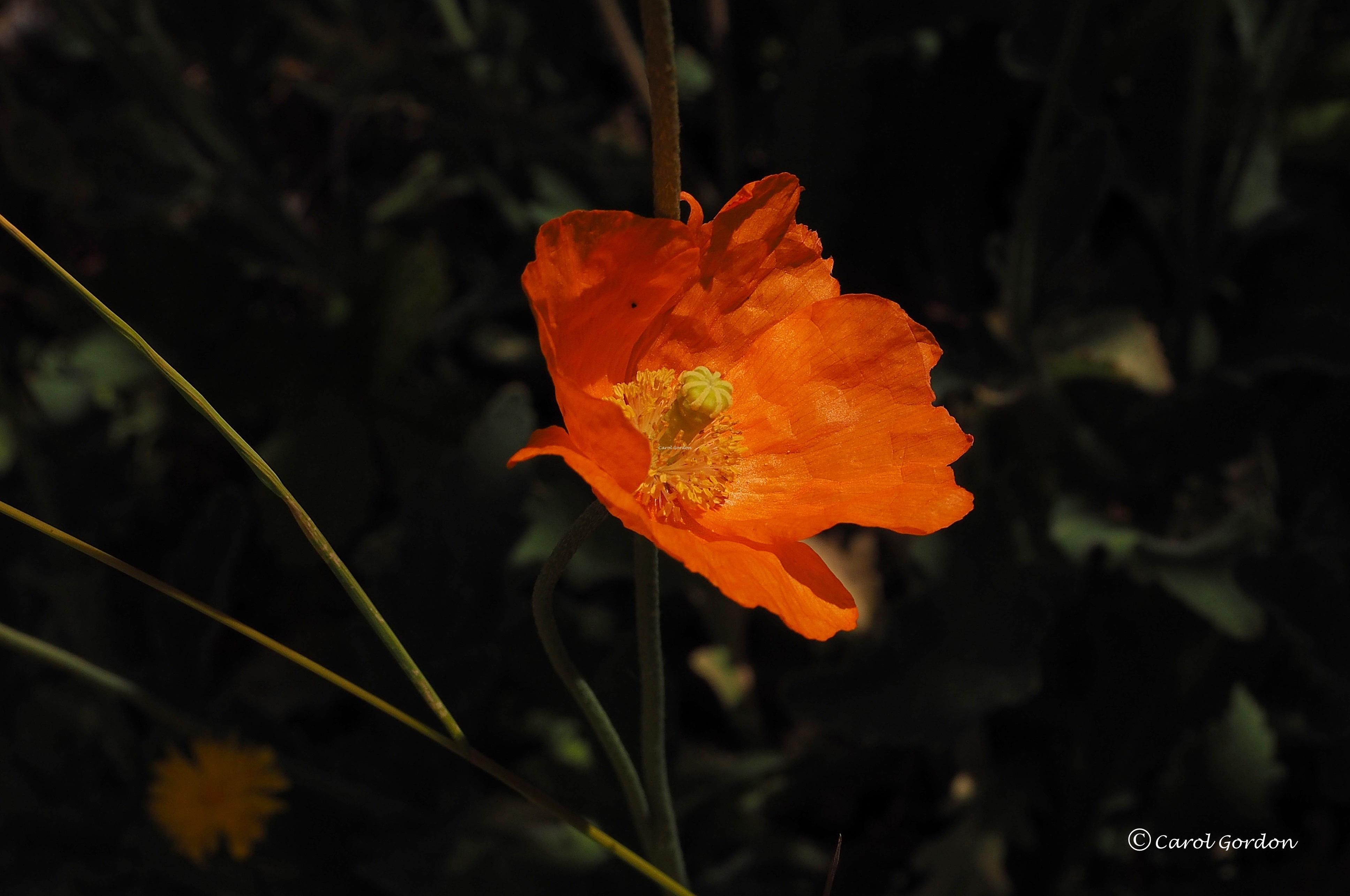 Flower 1 CG14