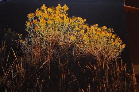 My Meadow.jpg