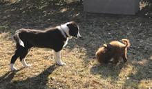 Sabato 7 novembre 2020 Corso cuccioli 2-5 mesi