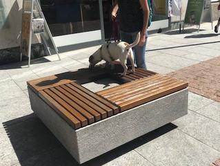 6.10.2019 Mobility Dog Urbana a Bellinzona