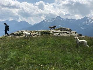 Domenica 30 maggio 2021 Passeggiata picnic e attività di ricerca olfattiva ludica a Carì