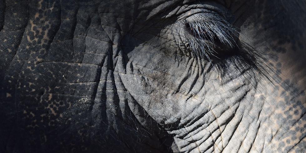Elephant Power 2020