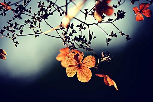 flowers-on-a-branch.jpg
