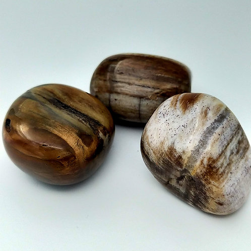 Petrified Wood Tumble