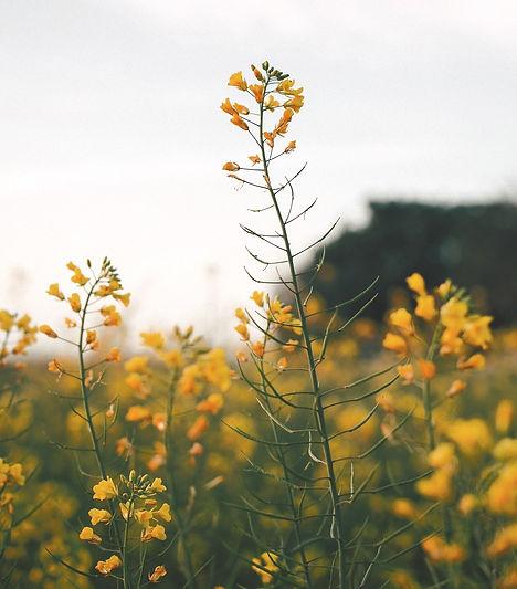 Terapia-Flores-de-Bach-Sanarnos-Medicina