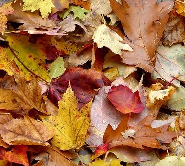 pile-of-autumn-leaves_edited.jpg
