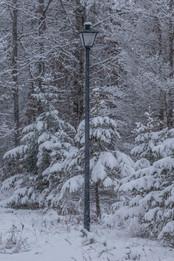 Lamppost of Narnia