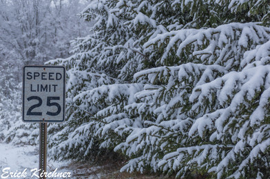 Snow-Covered Spruce Trees Along An Oakland, MD Road