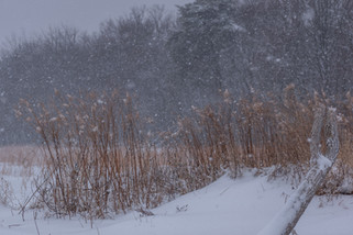 Countryside Snow