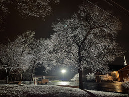 Icy Nighttime Trees