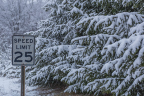 Snow-Covered Spruces Along Country Road