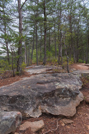 Rocky Terrain and Vibrant Trees
