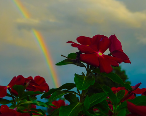 Flowers Backdropped by Distant Rainbow