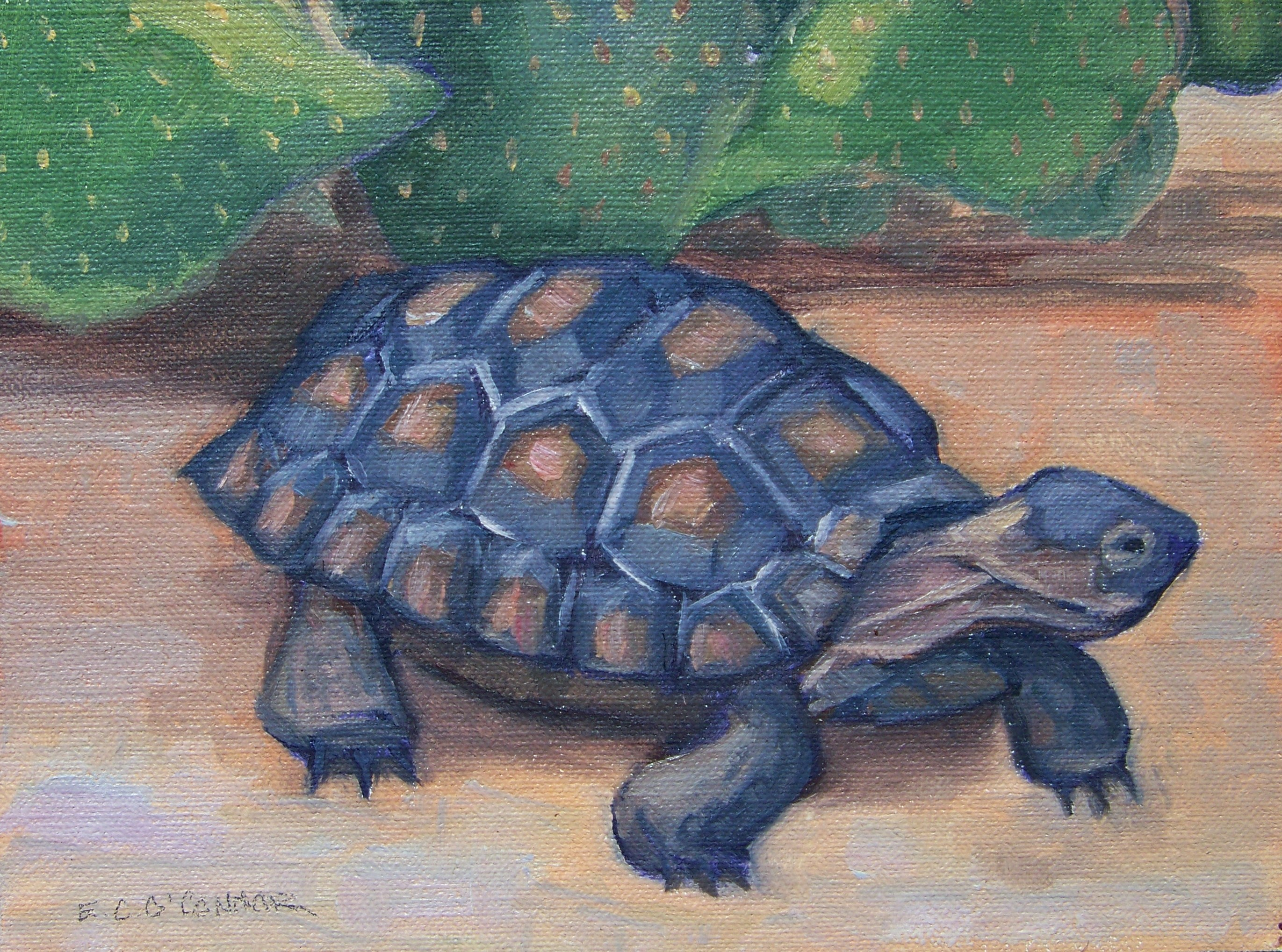 Young Tortoise 6x8. oil on linen