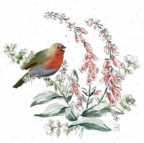 Robin on Foxglove