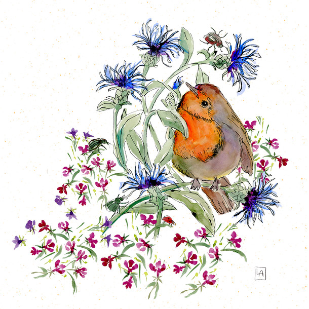 Robin On Cornflower