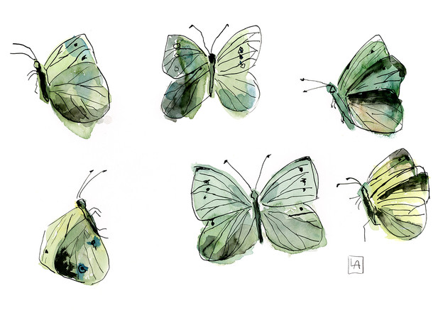 Green Moths