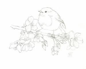Robin Redbreast on Cherry Blossom Branch